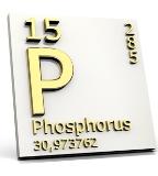 fosfor_02.jpg